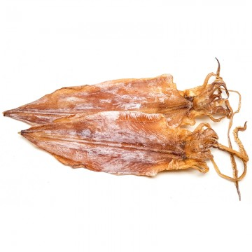 Cuttlefish (medium)