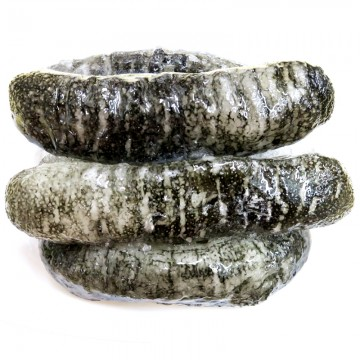 Fresh Frozen Sea Cucumber