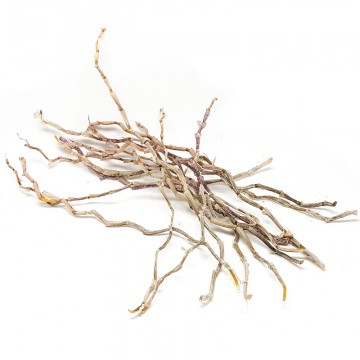 Dendrobium Stems (purple skin), Shi Hu